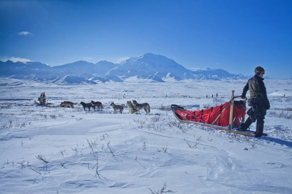 Dogs and sled