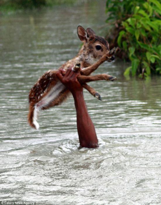 fawn rescue