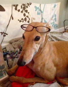 FrugalHound_glasses