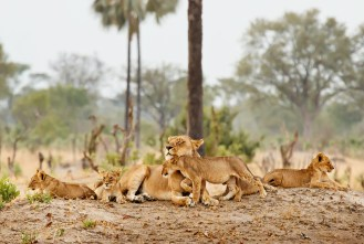 Mom and the Kids - Cecil's Family / Photo Credit: Ed Hetherington