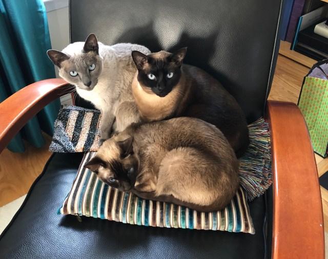 NYE cats