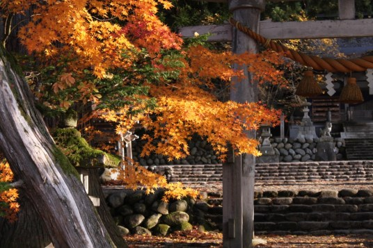 JLM Travel - Japon insolite - (c) Myun2