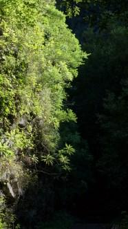 ~ lush jungle-like canyons ~