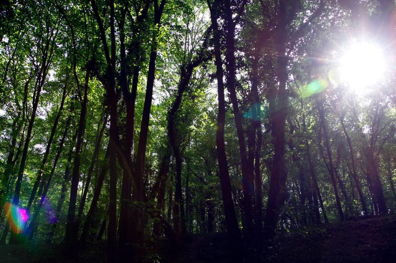 De zon piept tussen de bomen
