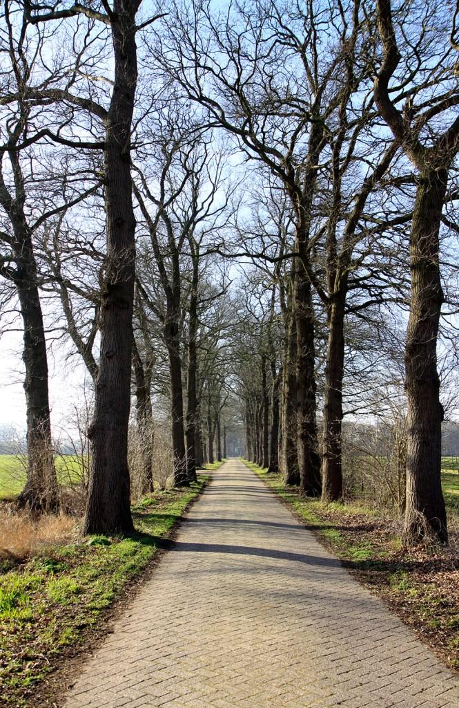 Bomenrijen markeren de route