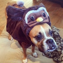 Owl Frank