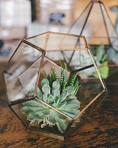 Succuent Geometric Terrarium