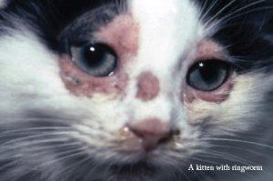 fungus pada kucing