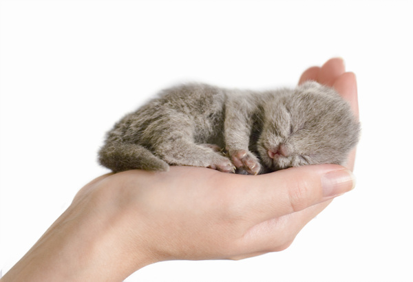 ✔ Bagaimana menjaga anak kucing 1 hingga 3 bulan ?