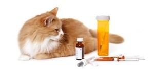 cara merawat kucing keracunan