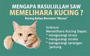Kucing dalam Islam