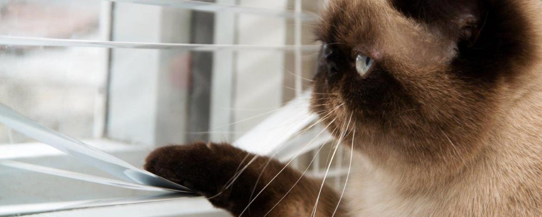 ✔ Tanda kucing mahu mengawan