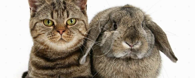 ✔ 8 Jenis WARNA Dan CORAK Bulu Kucing