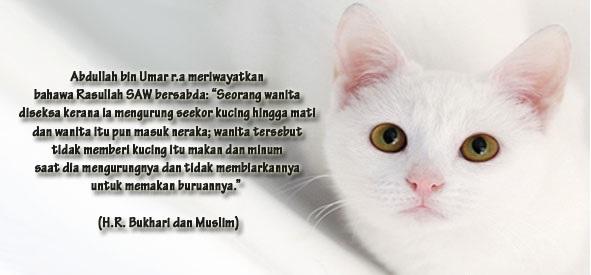 ✔Kucing dalam Islam