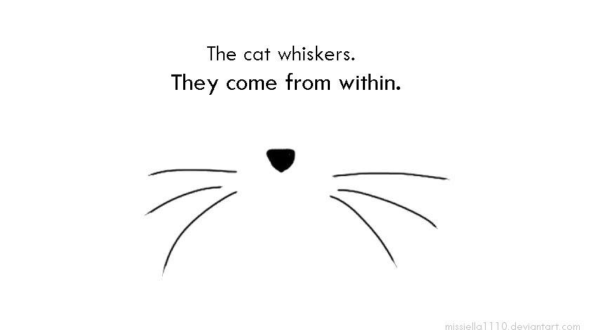 ✔ Fungsi Misai Pada Kucing
