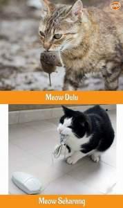 MEOW DULU VS SEKARANG