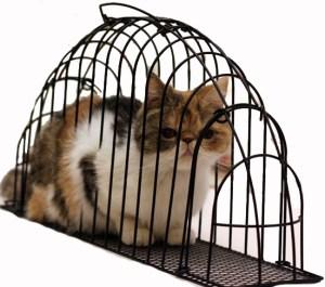 cara mandikan kucing