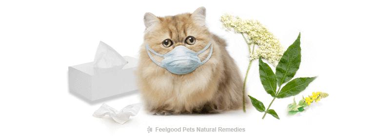 ✔ Cara Merawat Selsema Kucing