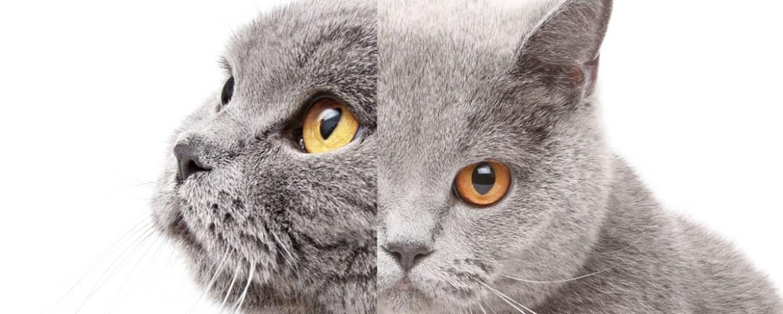✔ Anak kucing dua muka