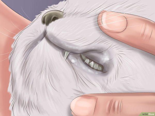 Cara Merawat Kucing Kena Cacing