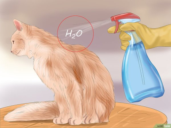 Cara Merawat Kucing Demam