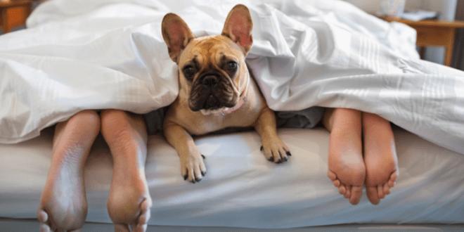 研究發現,與寵物同眠可以改善睡眠質素。 (網上圖片)