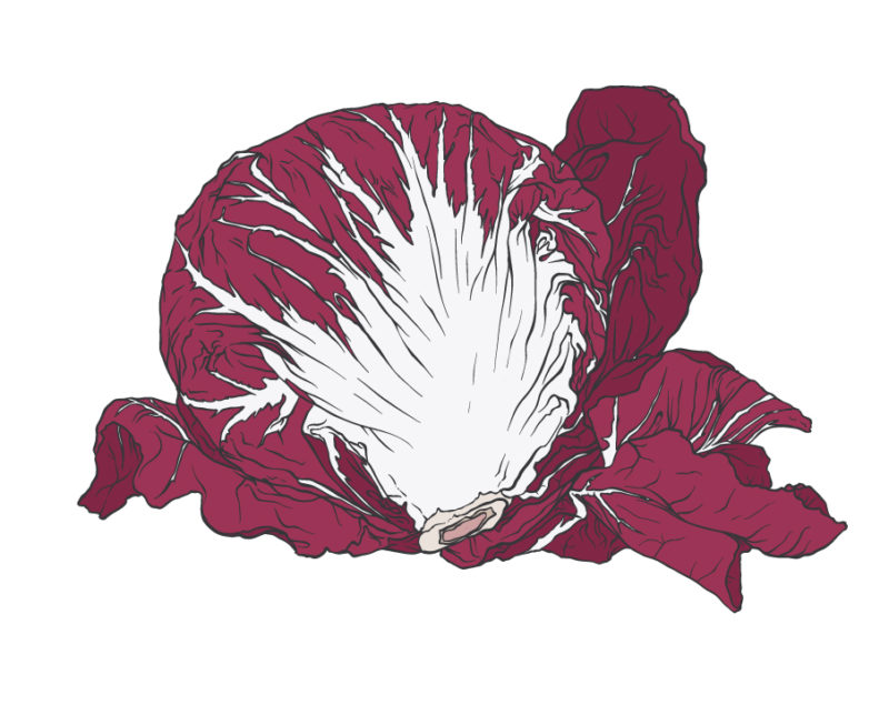 absolude-illustrations_radicchio