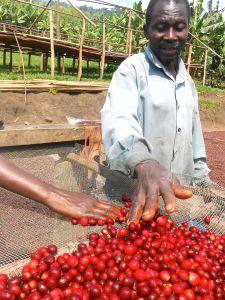 Semliki Farmer with cherry