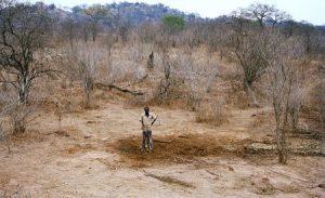 Al día siguiente ya no hay rastro del elefante. Los huesos sirven para hacer sopa. (Foto: Cortesía de David Chancellor)
