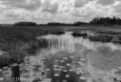 Serenity at Grassy Waters, FL.