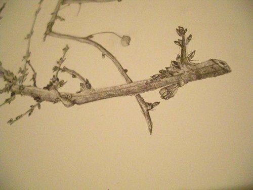 twig-drawing