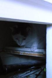 mon chat 007