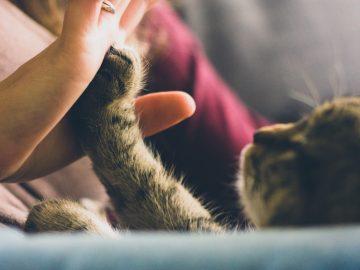 custody-of-a-pet