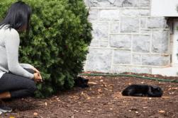 8. Visit the Quad Cats
