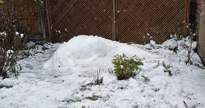 snowdragon2