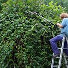 Création et taille de haies | Jo votre jardinier paysagiste à Chevillon, Charny Orée de Puisaye, Yonne (89) | www.jo-votre-jardinier-paysagiste.fr