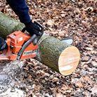 Élagage d'arbres | Jo votre jardinier paysagiste à Chevillon, Charny Orée de Puisaye, Yonne (89) | www.jo-votre-jardinier-paysagiste.fr