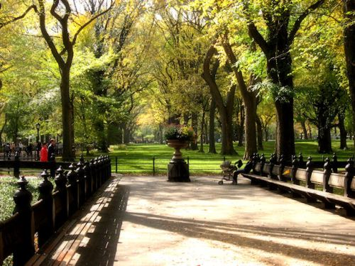 Photo of tree-lined path in Central Park taken by Joana Miranda