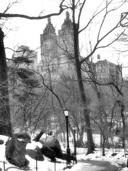 Black and white photo taken in Central Park by Joana Miranda