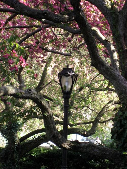 Photo of lamp post amid flowering cherry and magnolia trees, taken by Joana Miranda