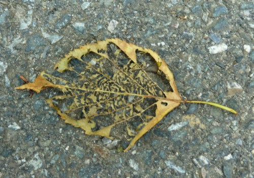 Photo of dried leaf, taken by Joana Miranda