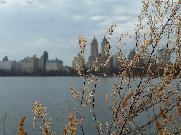 Photo of the Jacqueline Kennedy Onassis reservoir on a grey day in February