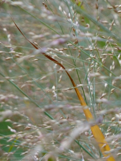 wild grasses in the fall