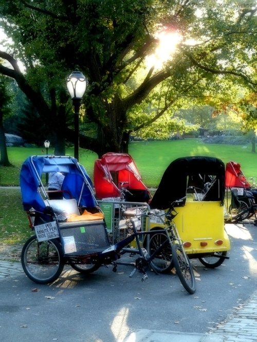 Bike carriages in Central Park