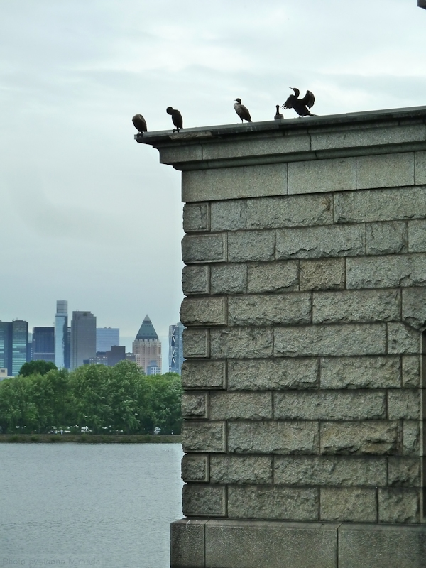 birds atop one of the Jackie O reservoir buildings