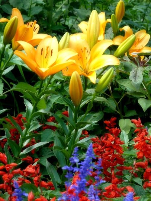 riot of colors garden