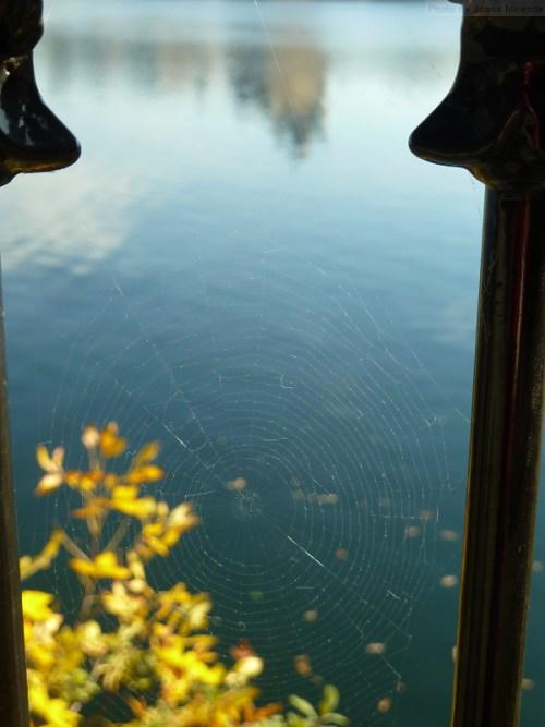 sunlit spider web