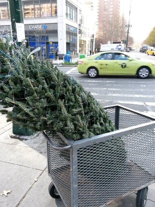 Tree in a rolling cart