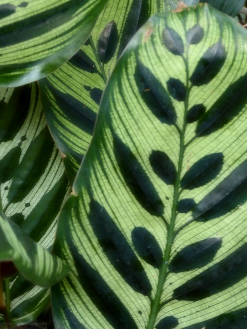 leaves with pretty patterns2
