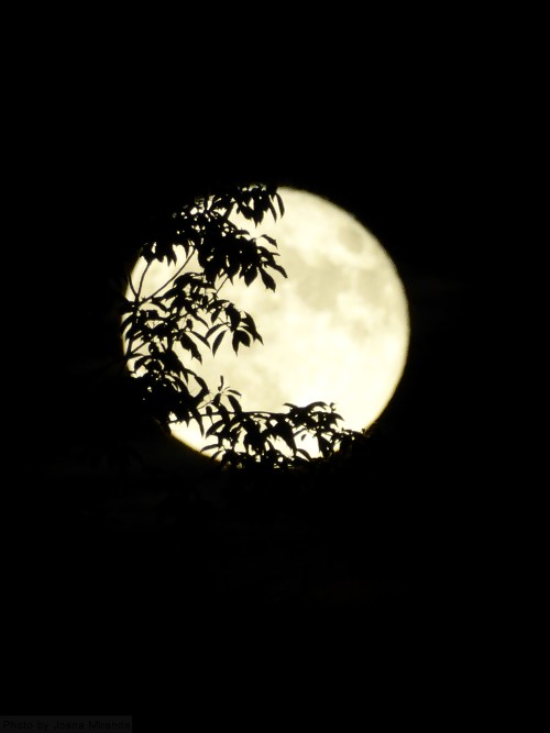 moon-through-the-trees
